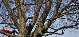 Dormir la siesta en un árbol