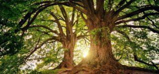 樹齢1000年以上の大木が立ち並ぶ森があるサモラ