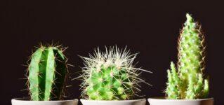 Me encantan los cactus