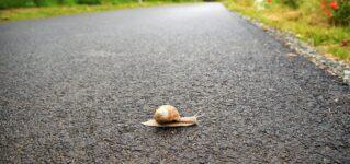 Cruzar la carretera