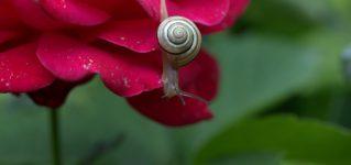"""ストーリーを読んでシャドーイングしよう!解説:<br><br> """"El caracol y el rosal""""「カタツムリとバラの木」"""