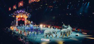 A los niños les apasiona el circo