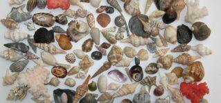 Colección de conchas