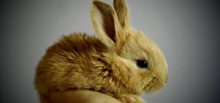 Conejo para comer o mascota