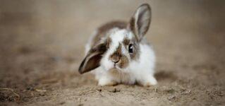 Un conejo muy bonito