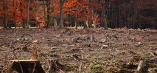 ¿Qué significa deforestar?