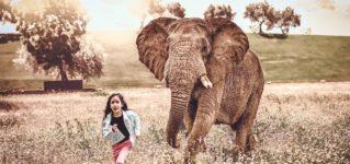 ¿Qué harías si hubiese un elefante en tu jardín?
