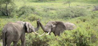 Unos elefantes muy educados