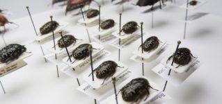 身近な虫の名前をスペイン語でいくつ言える?
