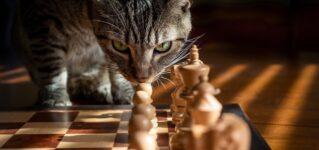 ¿Los gatos pueden jugar al ajedrez?