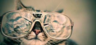 Mi gato necesita gafas