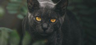 Un gato negro cerca de mi casa