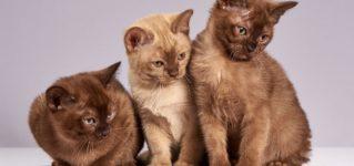 Tres gatos en clase