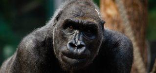 ¿Qué diferencias hay entre los monos y nosotros?