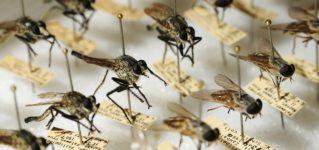 Colección de mosquitos y moscas