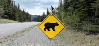 ¡Peligro osos!