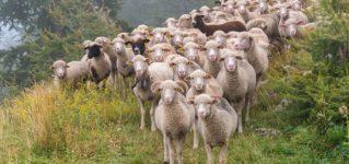"""¿Qué significa """"ser la oveja negra"""" de la familia?"""