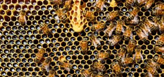En un panal de rica miel