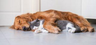 Llevarse como un perro y un gato