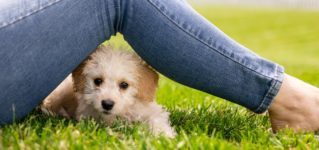 ¿Es positivo tener una mascota en casa?
