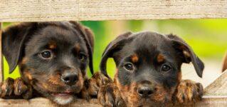 マドリードでは何匹の犬が飼われている?