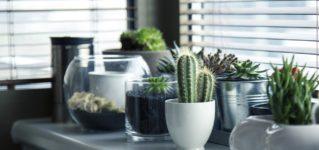 ¿En tu lugar de trabajo hay plantas?