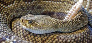 Serpientes en los parques japoneses