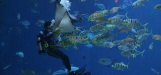 Los acuarios en Japón