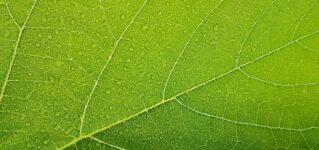 スペインのバルコニーの日よけはなぜ緑色なのか?