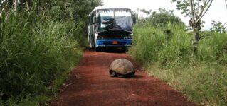 Una tortuga en el camino