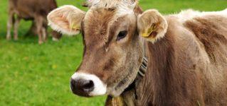スペイン産の牛肉がまた日本でも食べられるように!